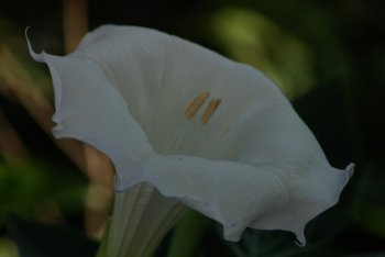 20060719