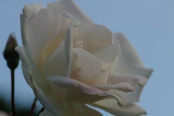 20061107