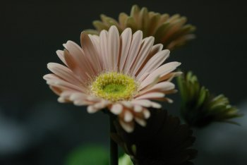 200611112